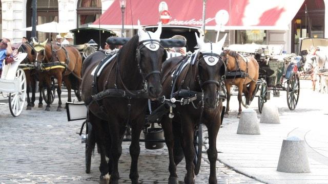 Экипажи с лошадьми в Вене