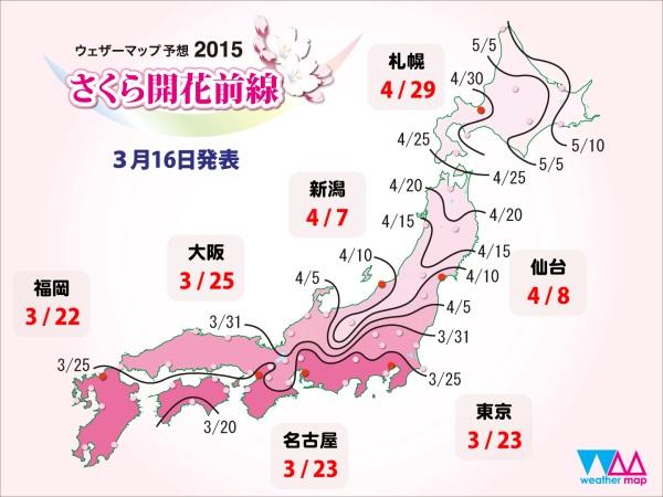 Фронт цветения сакуры в этом году