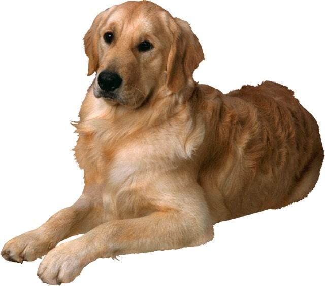 Удаление собачьих экскрементов