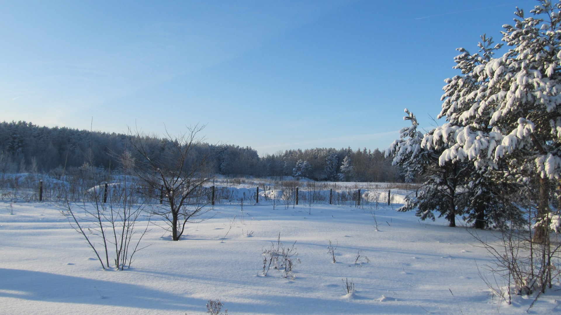 Зимнее поле
